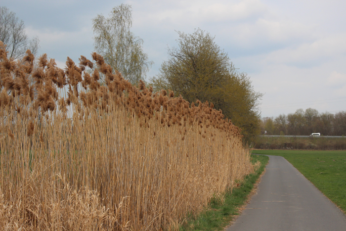 Kurz vor Bernau: Der Radweg führt an der Panke entlang