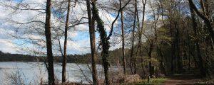 Bild vom Liepnitzsee