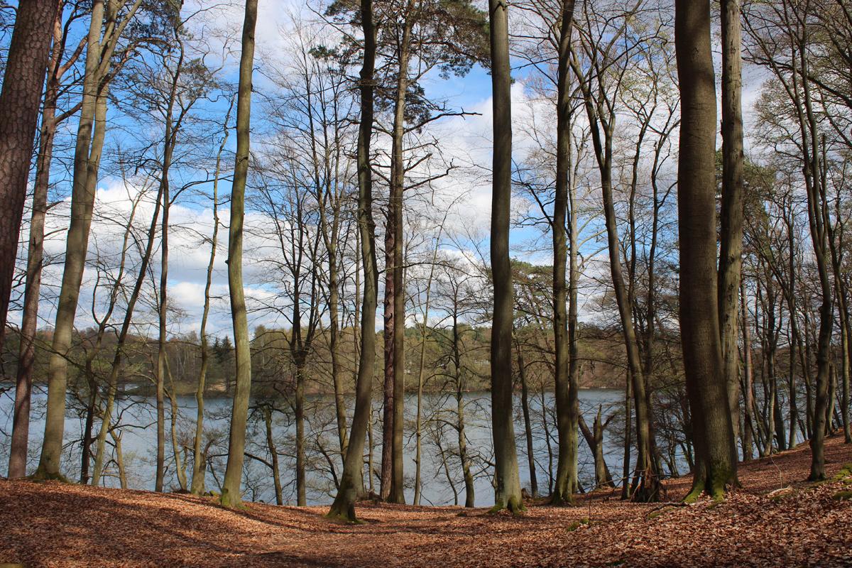 Einer der schönsten Seen im Norden Berlins: Der Liepnitzsee liegt mitten im Wald und lohnt sich auch für Wanderer