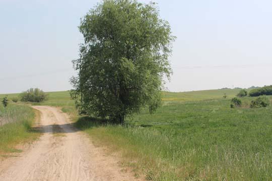 Foto vom Radfernweg Usedom zwischen Schmarsow und Rollwitz