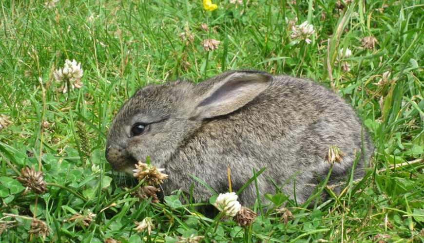 Wimmertalalm Kaninchen