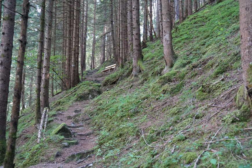 Weg durch den Wald zur Alpenrose Fellenberg
