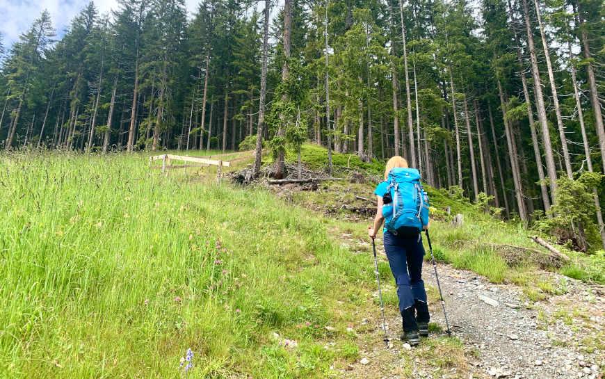 Aufstieg Nasenalm von Hippach Wanderweg 19